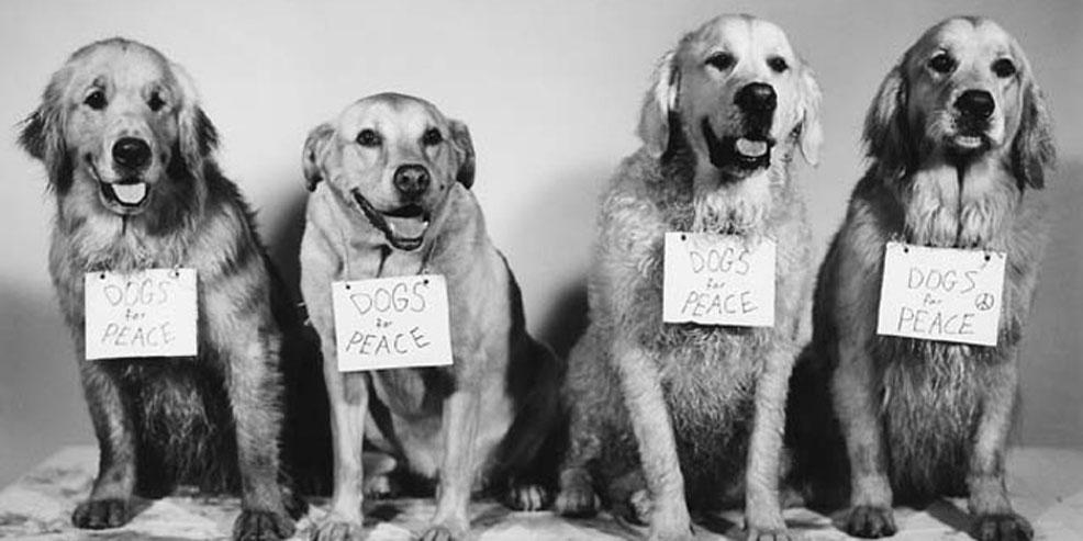 Orientation: Assistante vétérinaire, la passion des animaux